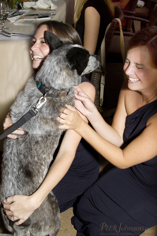 Ventana Inn Wedding Bridemaids With A Dog