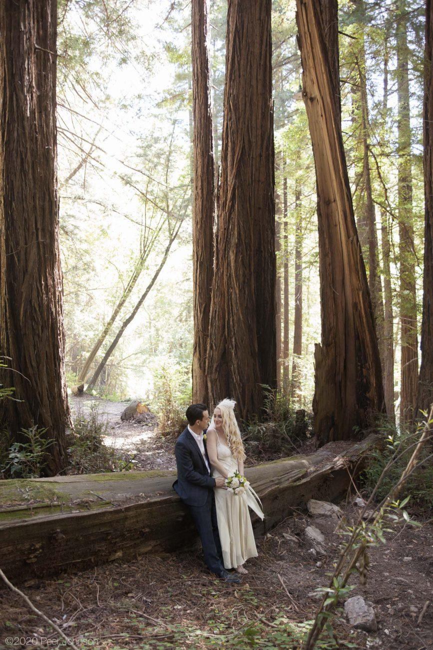 Old-growth redwoods at Glen Oaks.